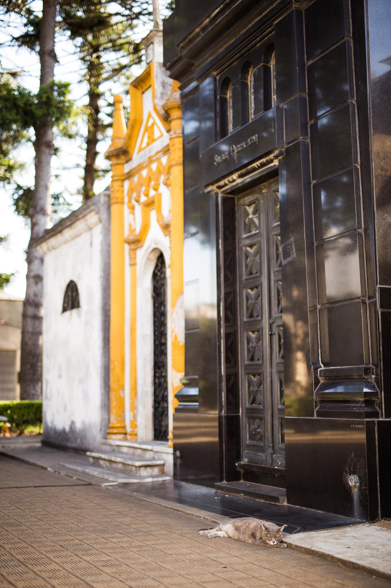 Wedding-travellers-Argentina-Buenos-Aires-Recoleta-cemetery-cat