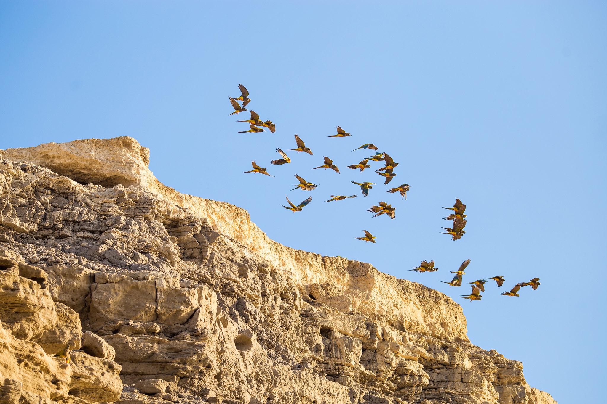 balneario-el-condor-parrot-colony