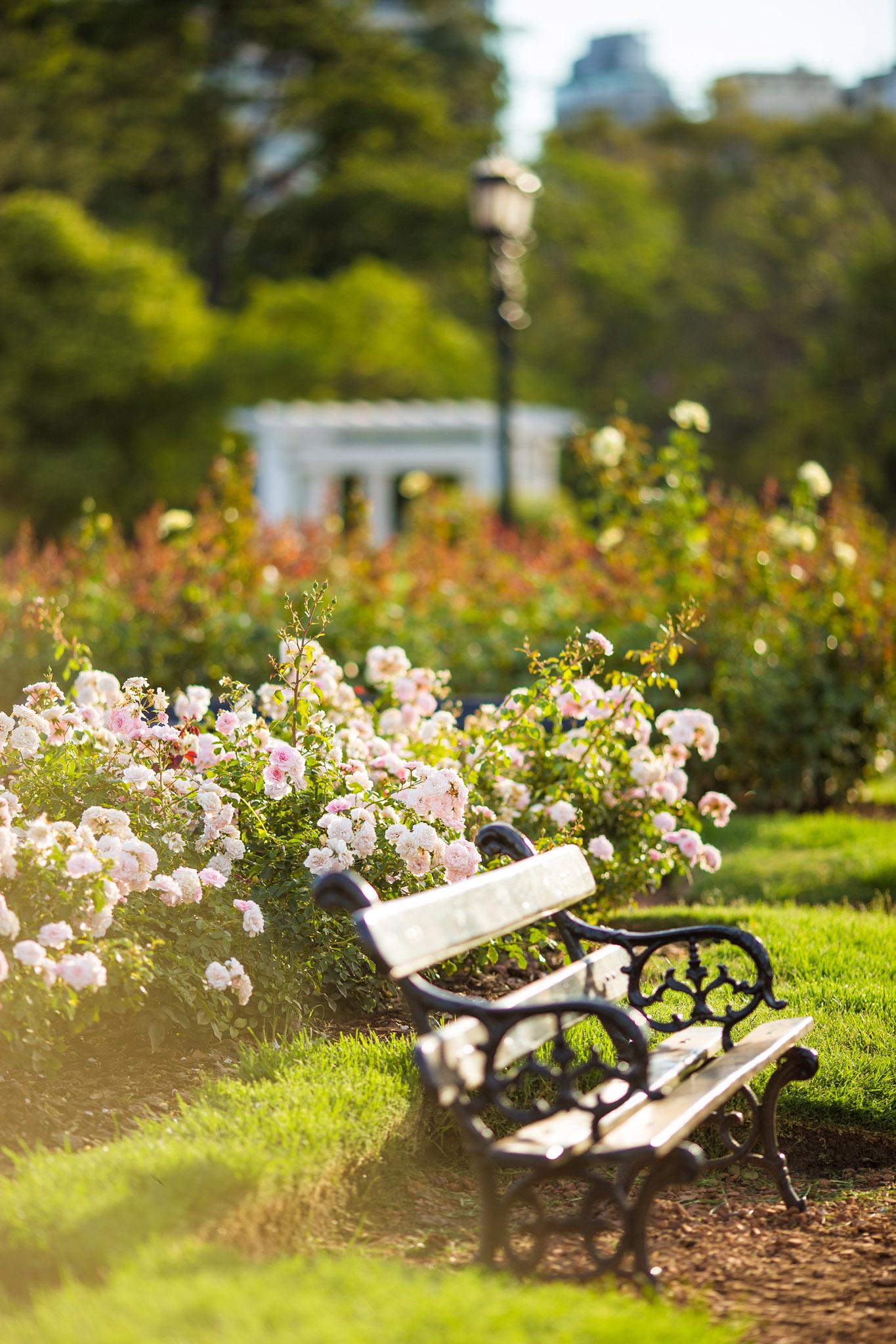 Wedding-travellers-Argentina-Buenos-Aires-Botanical-Garden-Jardin-Botanico-Rosario-Rose-Bench