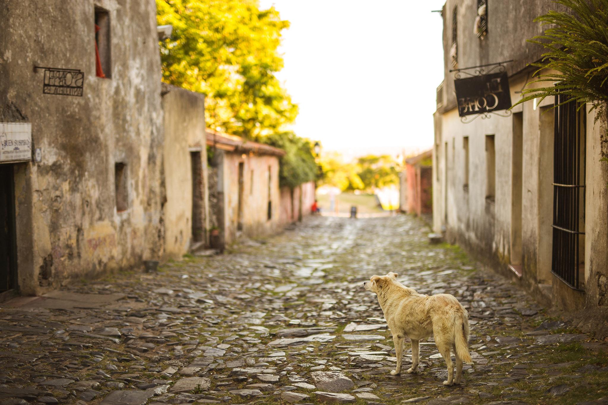 wedding-travellers-destination-photography-overlanding-south-america-uruguay-colonia-del-sacramento-cobblestone-street-dog