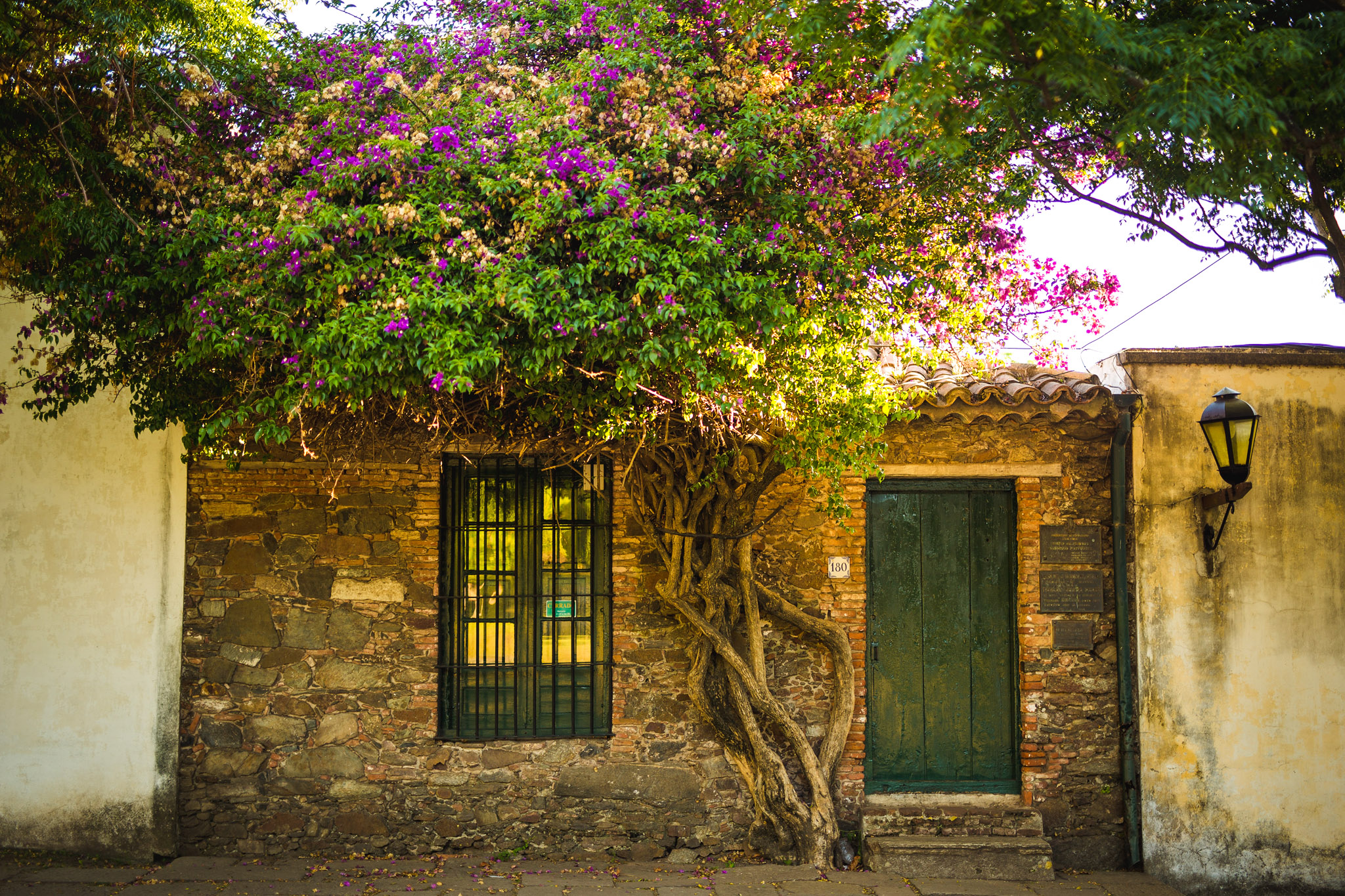 wedding-travellers-destination-photography-overlanding-south-america-uruguay-colonia-del-sacramento-picturesque-house-flowers-tree-stone