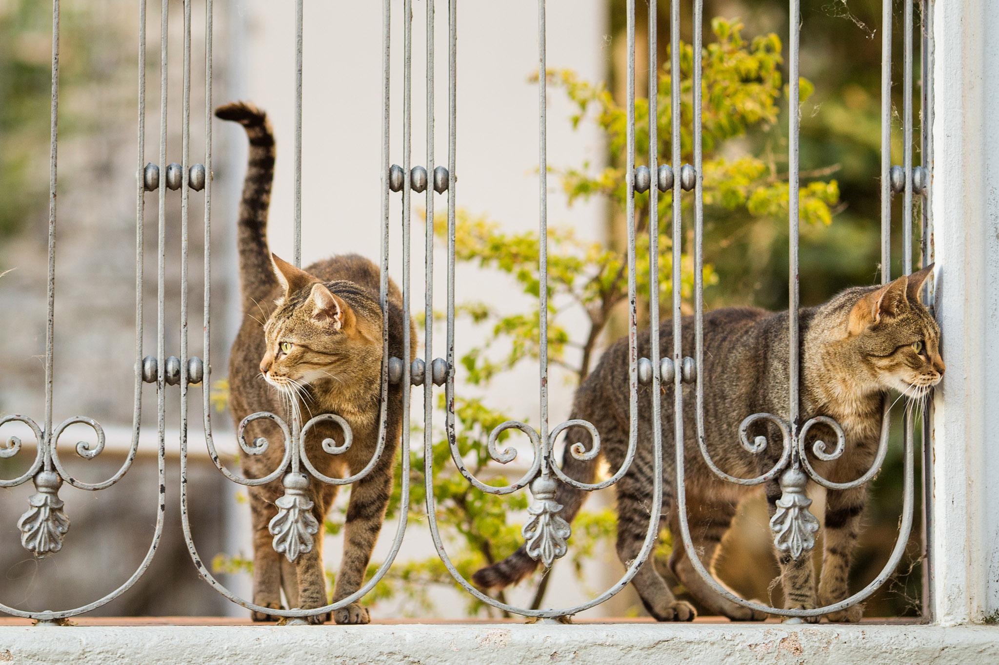 wedding-travellers-destination-photography-overlanding-south-america-uruguay-colonia-del-sacramento-cats-cute-tiger
