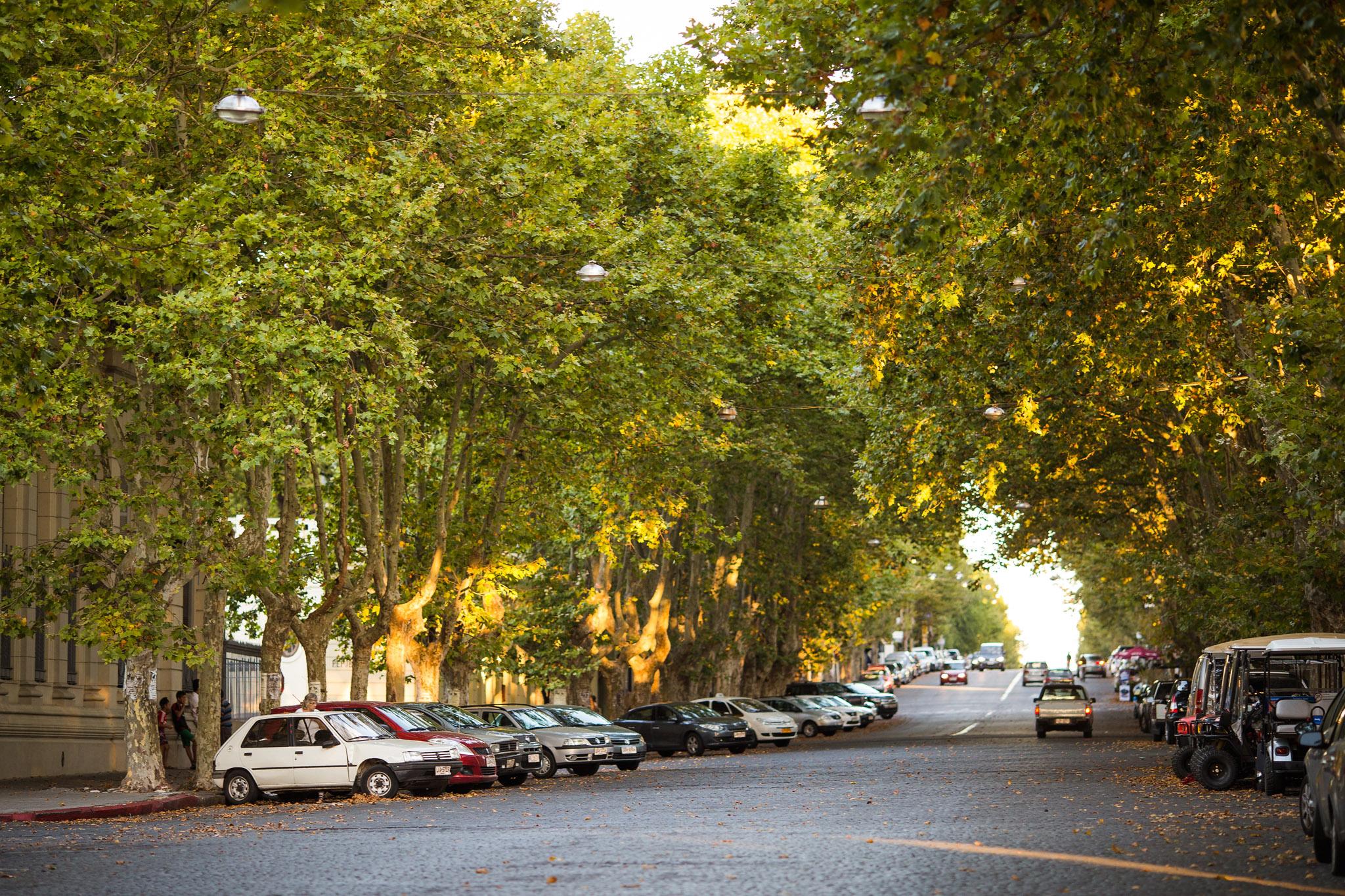 wedding-travellers-destination-photography-overlanding-south-america-uruguay-colonia-del-sacramento-avenue-trees-street-road-cars-nice-green-sunset