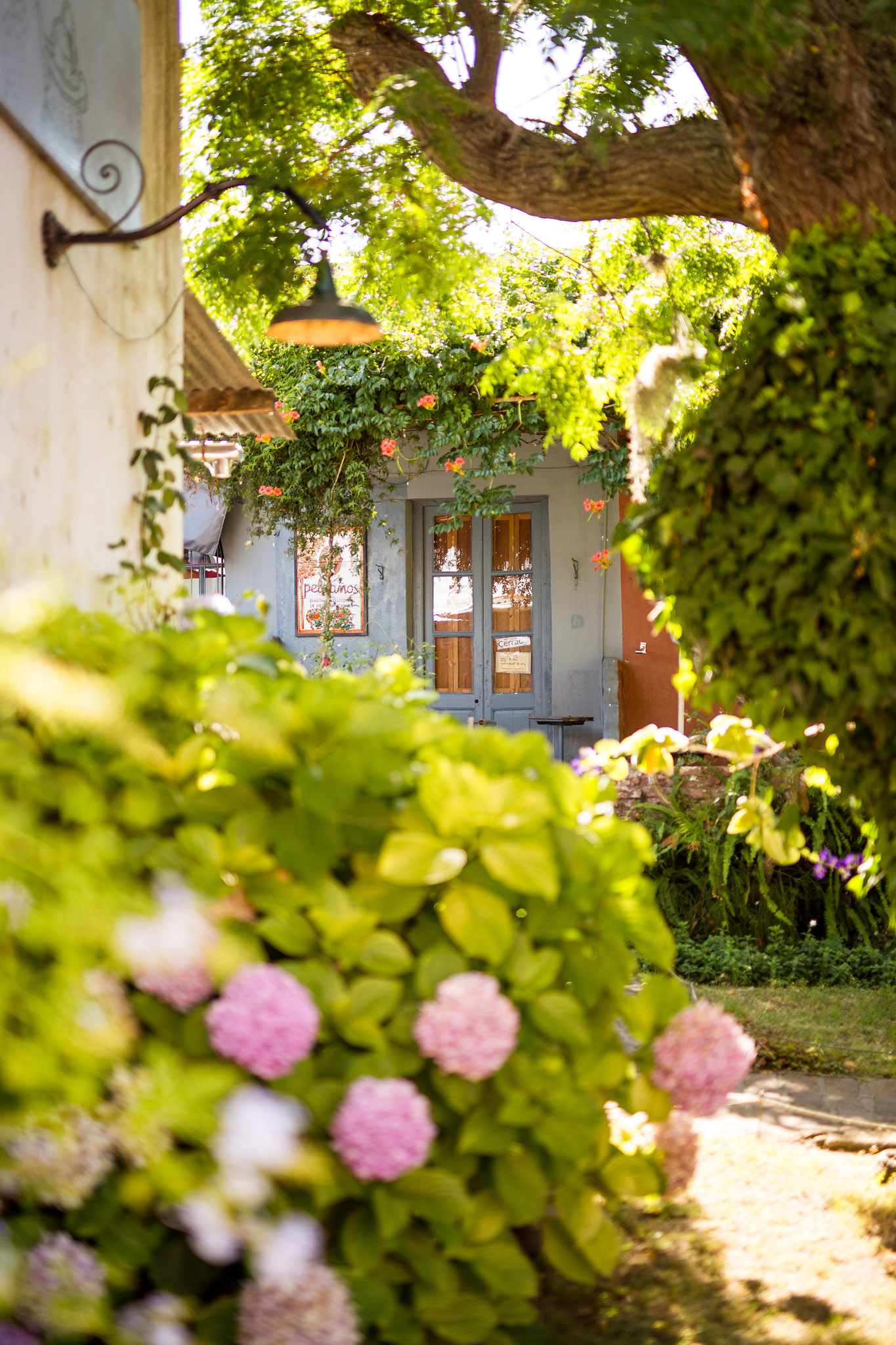 wedding-travellers-destination-photography-overlanding-south-america-uruguay-colonia-del-sacramento-garden