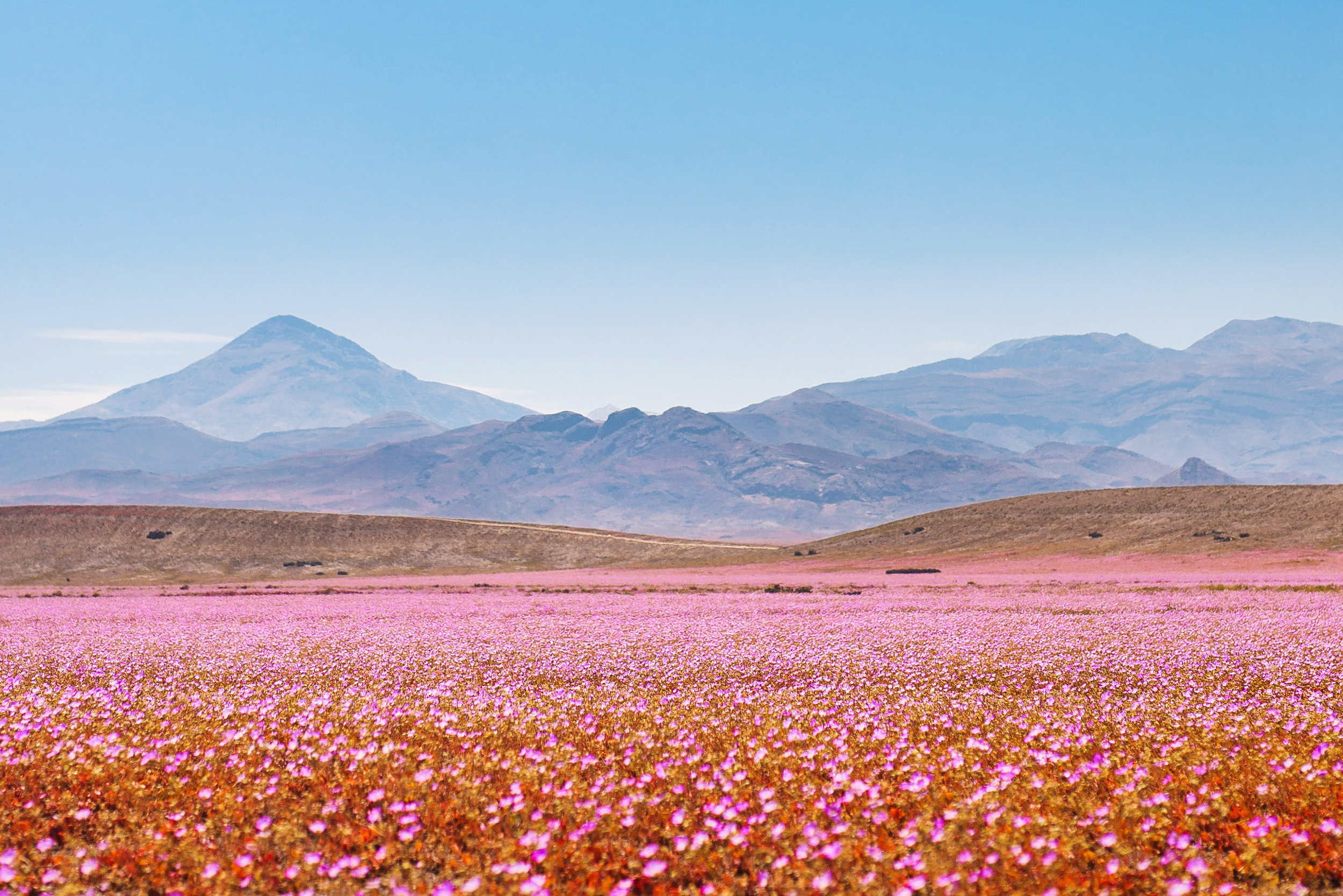 Desierto Florido.jpg