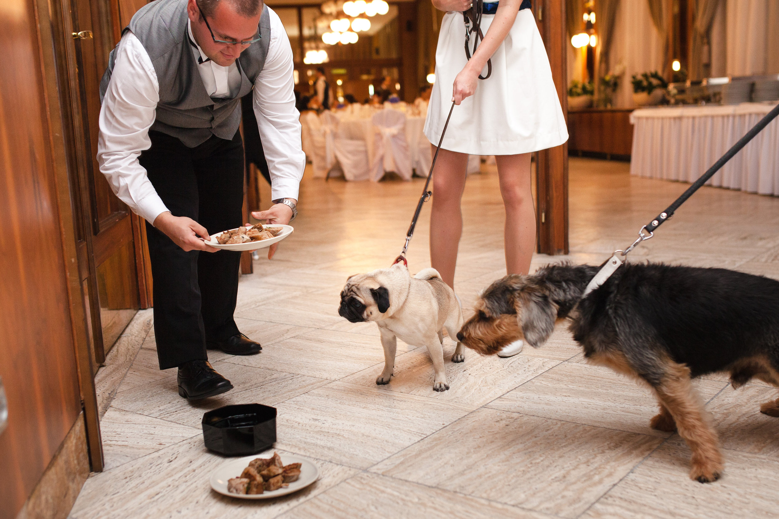 destination-wedding-photographer-slovakia-bratislava-reception-hotel-devin-dogs-eating.jpg