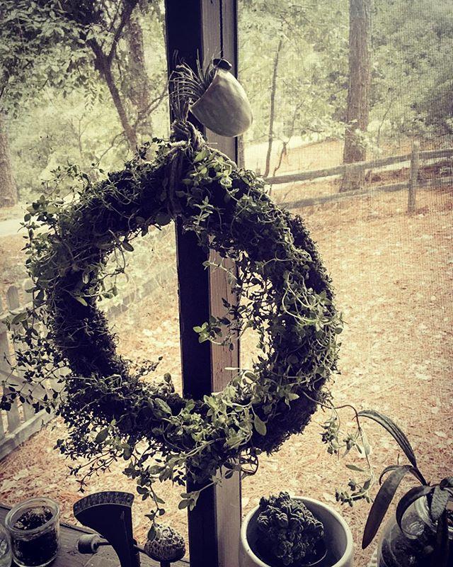 Herb garden living wreath! 🌱👩🏻🌾 #porchlife #thyme #marjoram #maker #plantlady