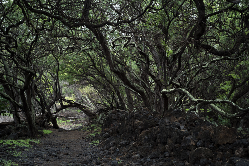 Julie-Jira_La-Perouse-Bay_Maui-6.jpg