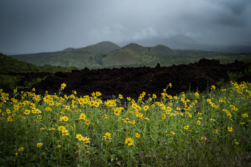 Julie-Jira_La-Perouse-Bay_Maui-9.jpg