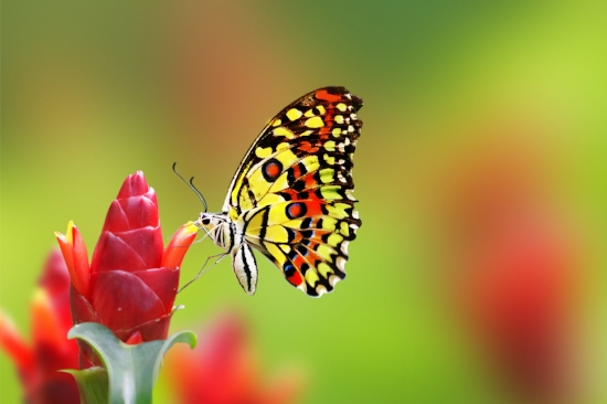5-Cosmic-Signs-If-You-See-A-Butterfly-Too-Often.jpg
