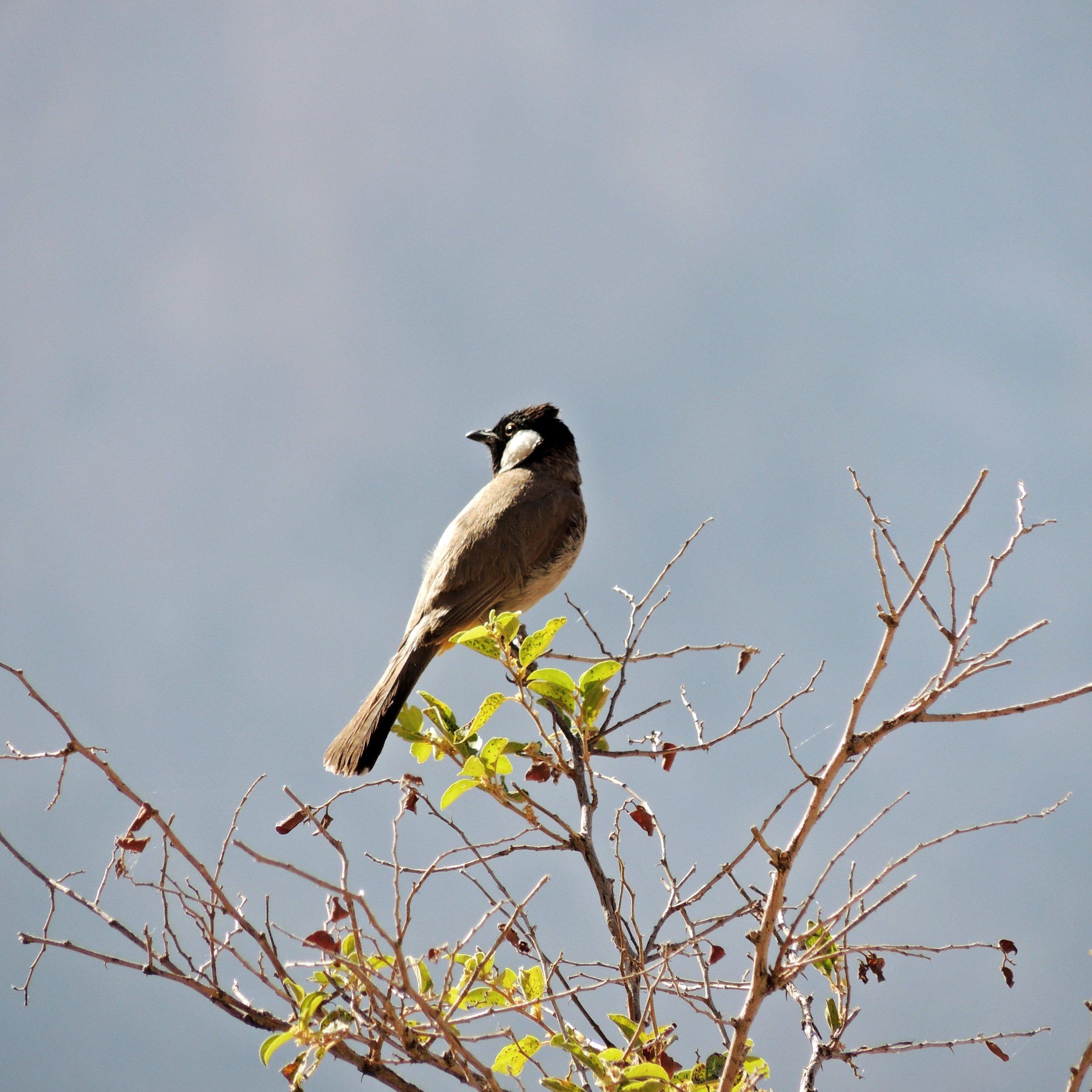 På vägen uppför berget såg vid både fåglar...