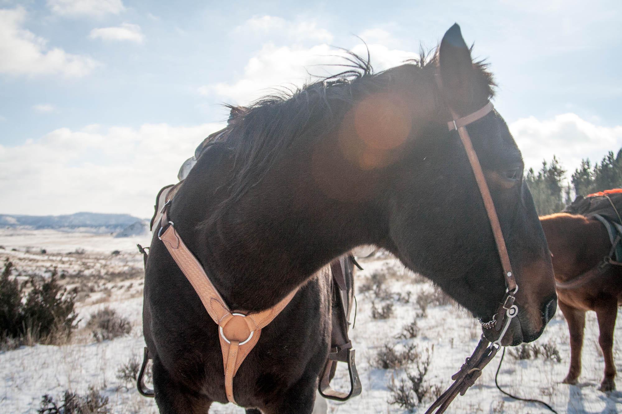 horsepack-1-38.jpg