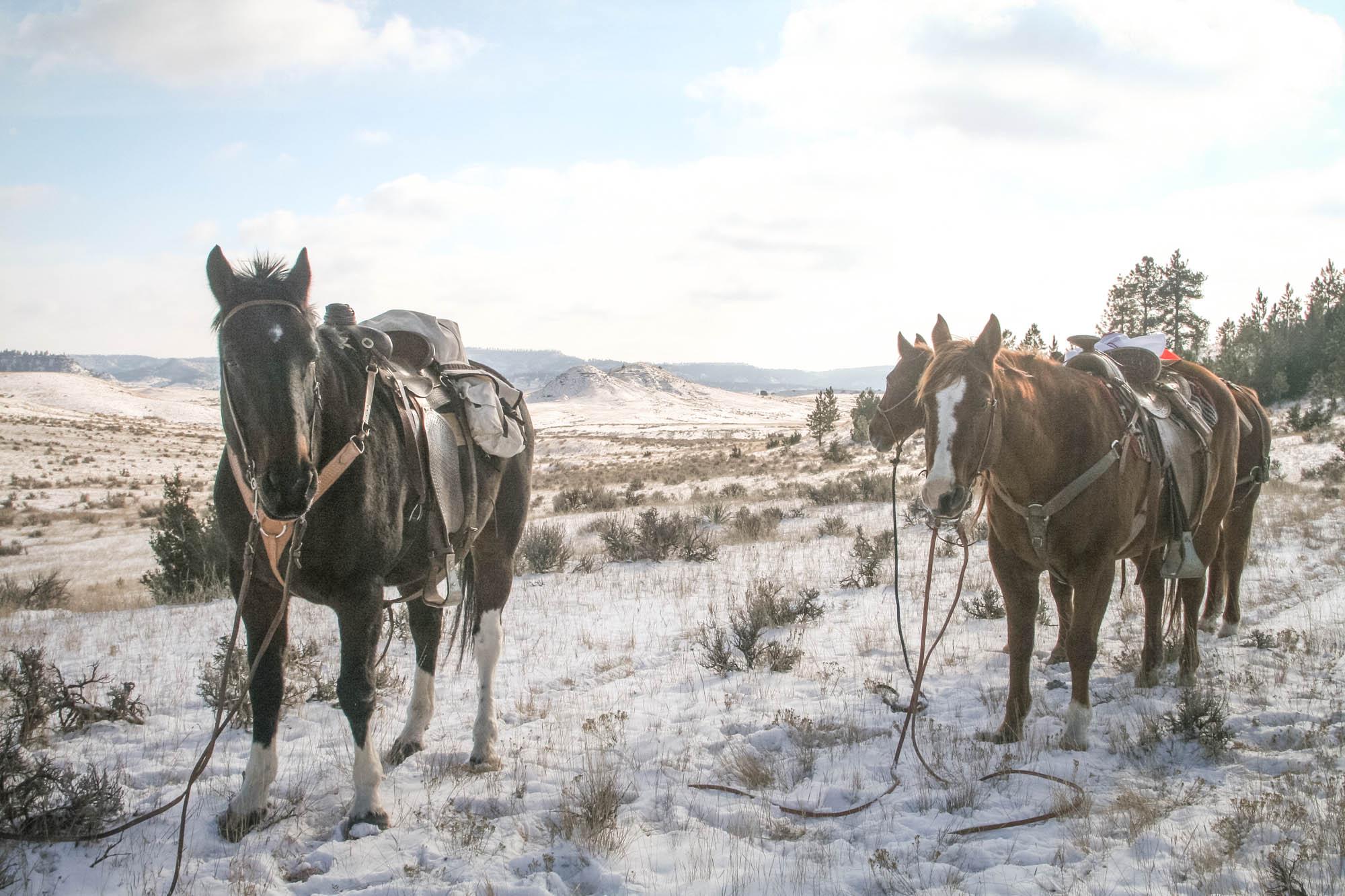 horsepack-1-42.jpg