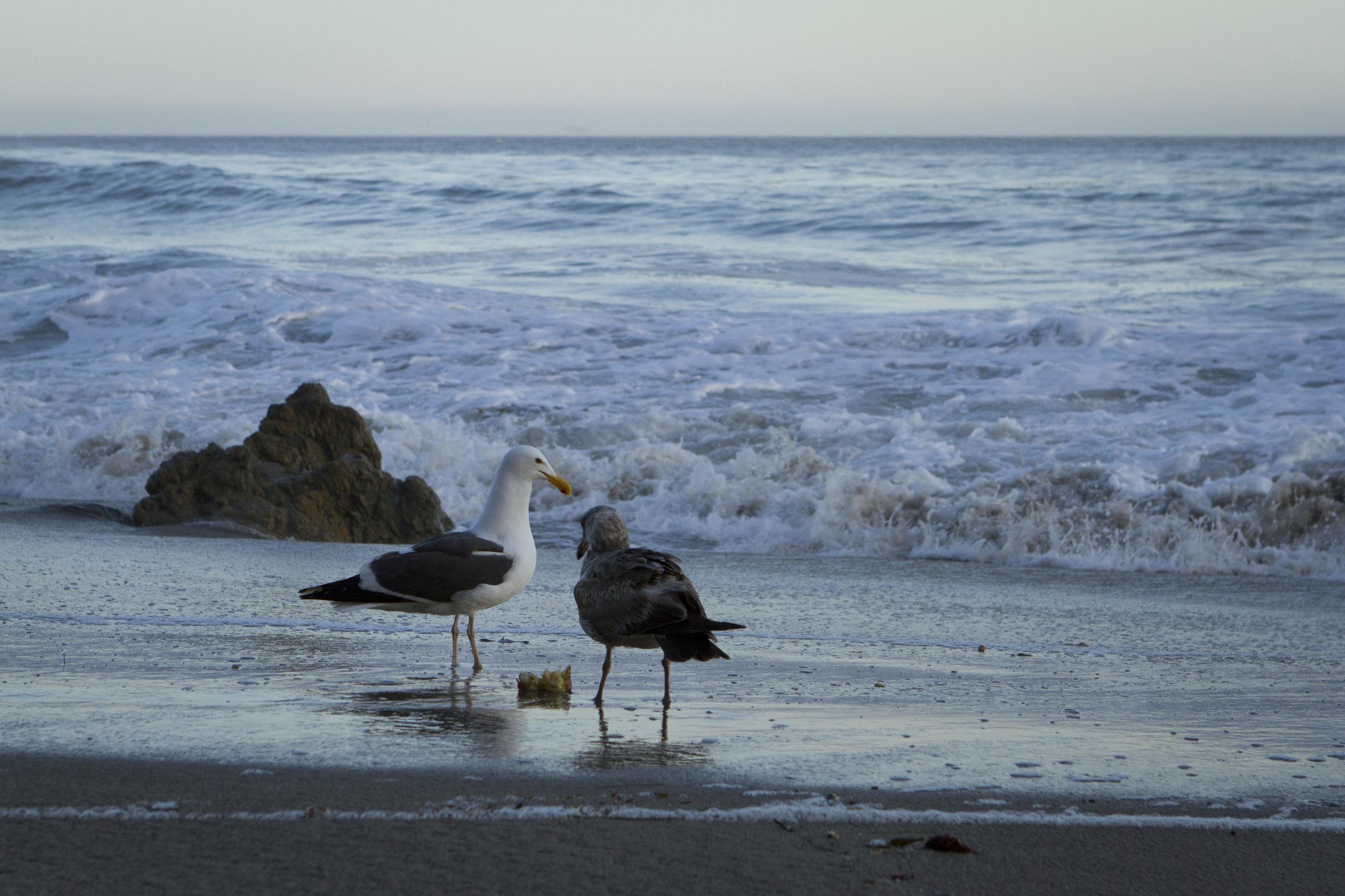Birdwater2.jpg