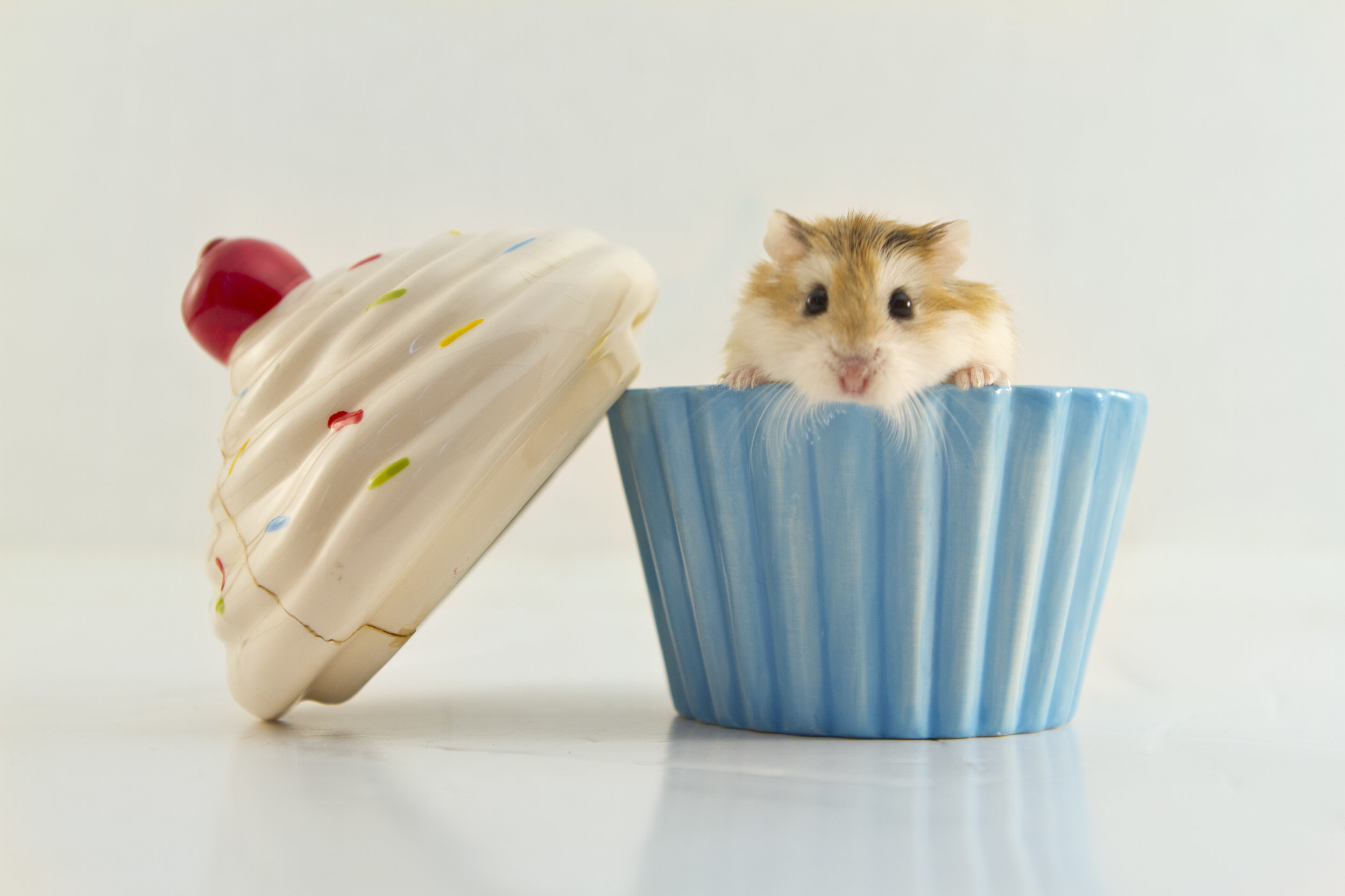 Cupcakehams.jpg