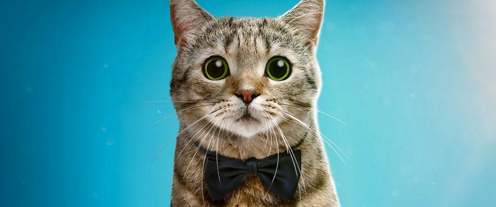 2019 NY Cat Film Fest