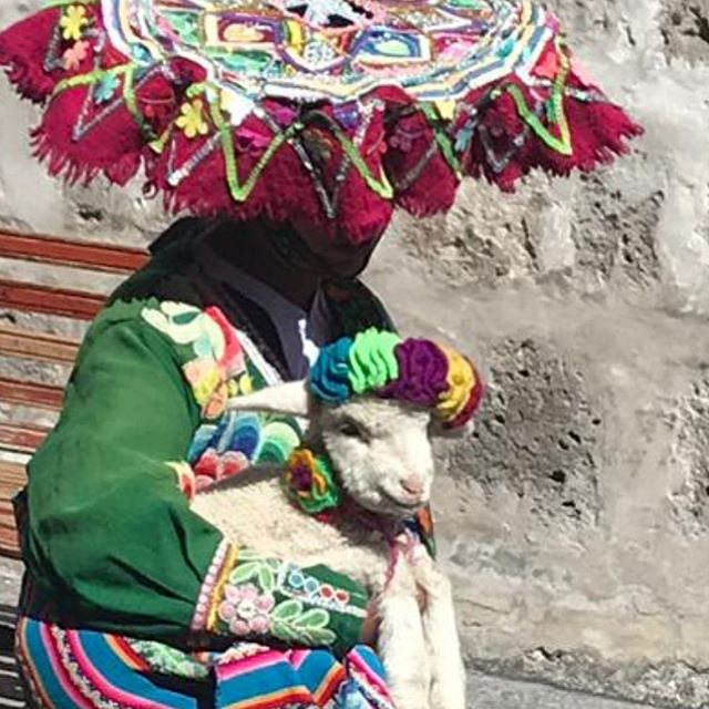 #fitfashionmfa in #arequipa researching #alpaca and #vicuña Fashion Farming: Peru
