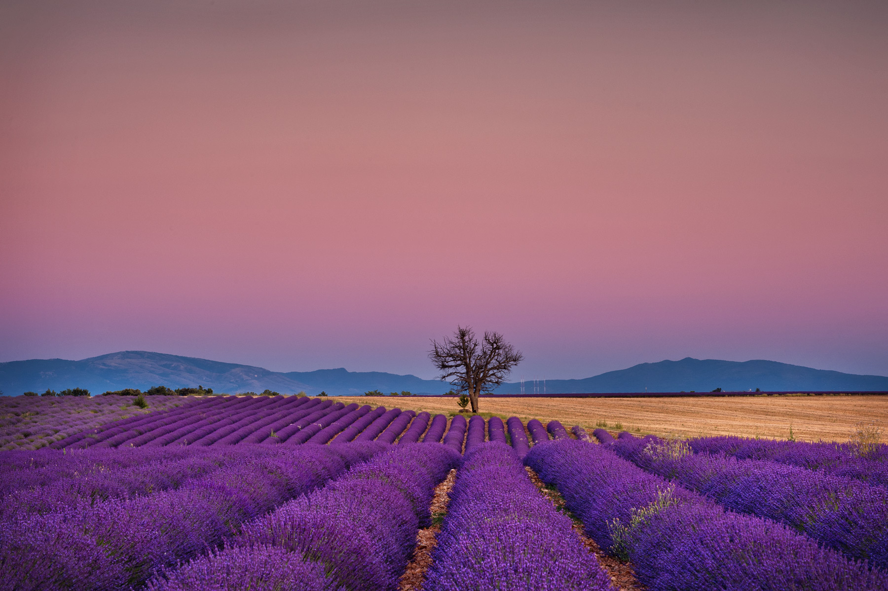 LavenderSunsetSkyFrance.jpg