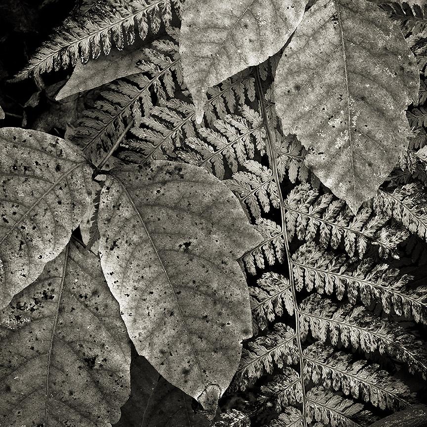 Foliage Detail