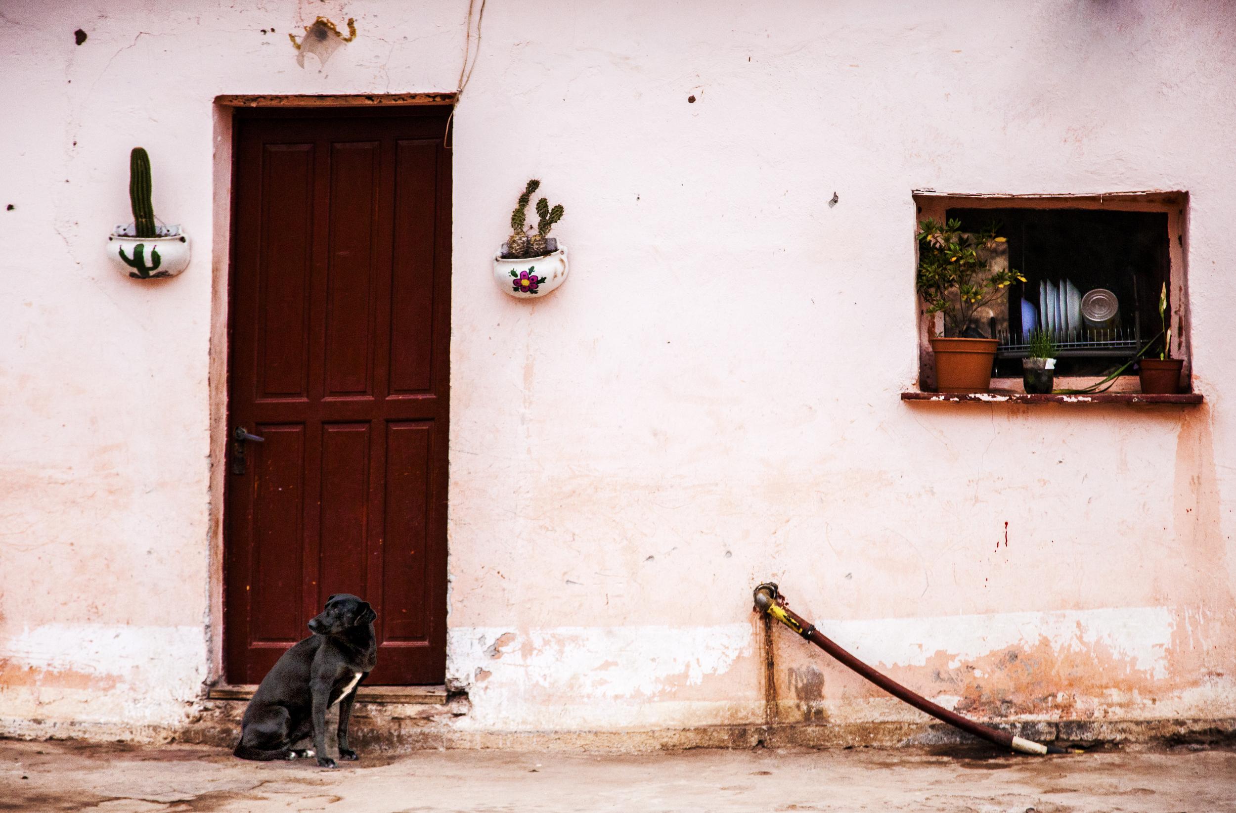 Dog pink banal.jpg