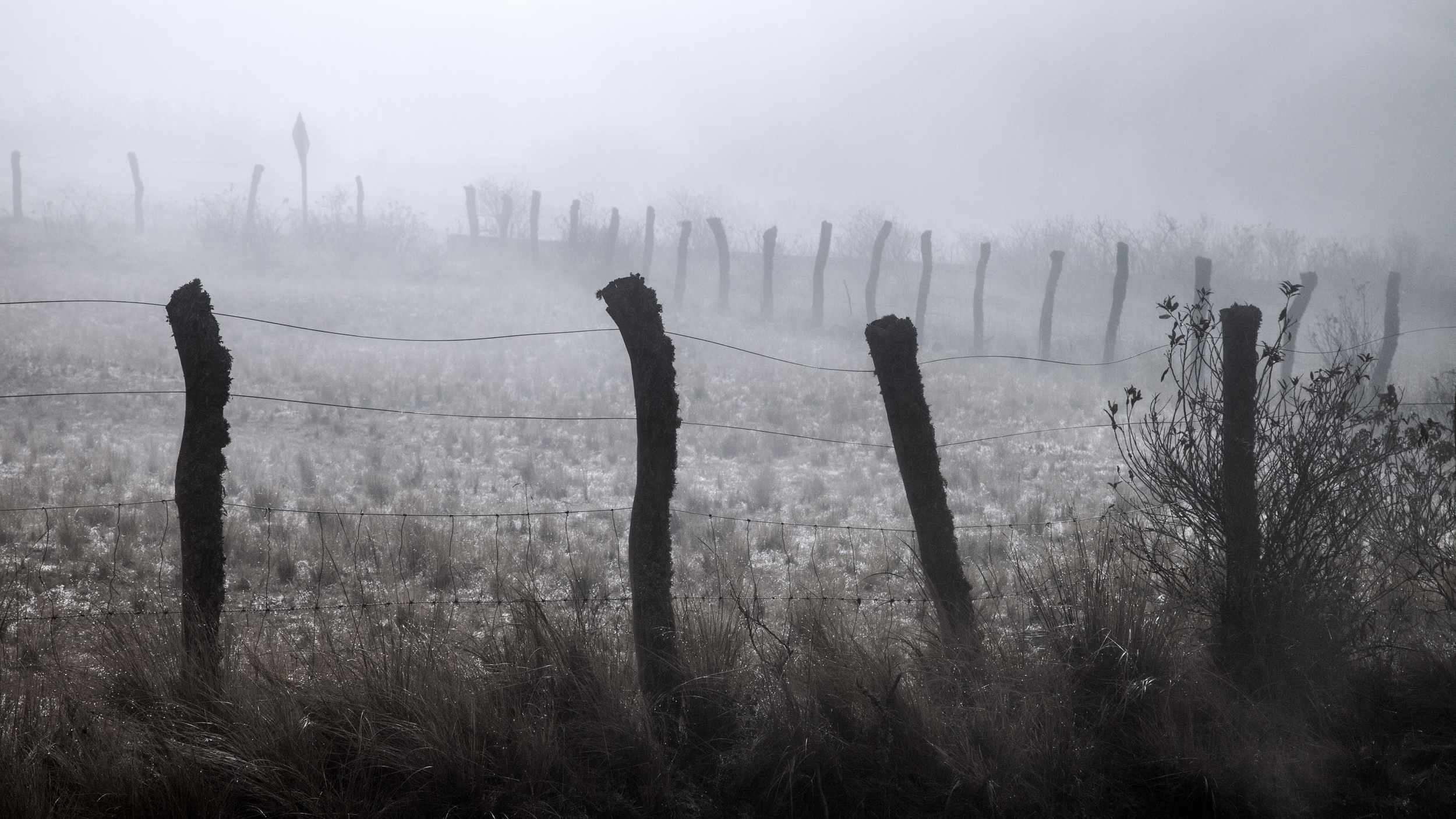 Fence in fog.jpg
