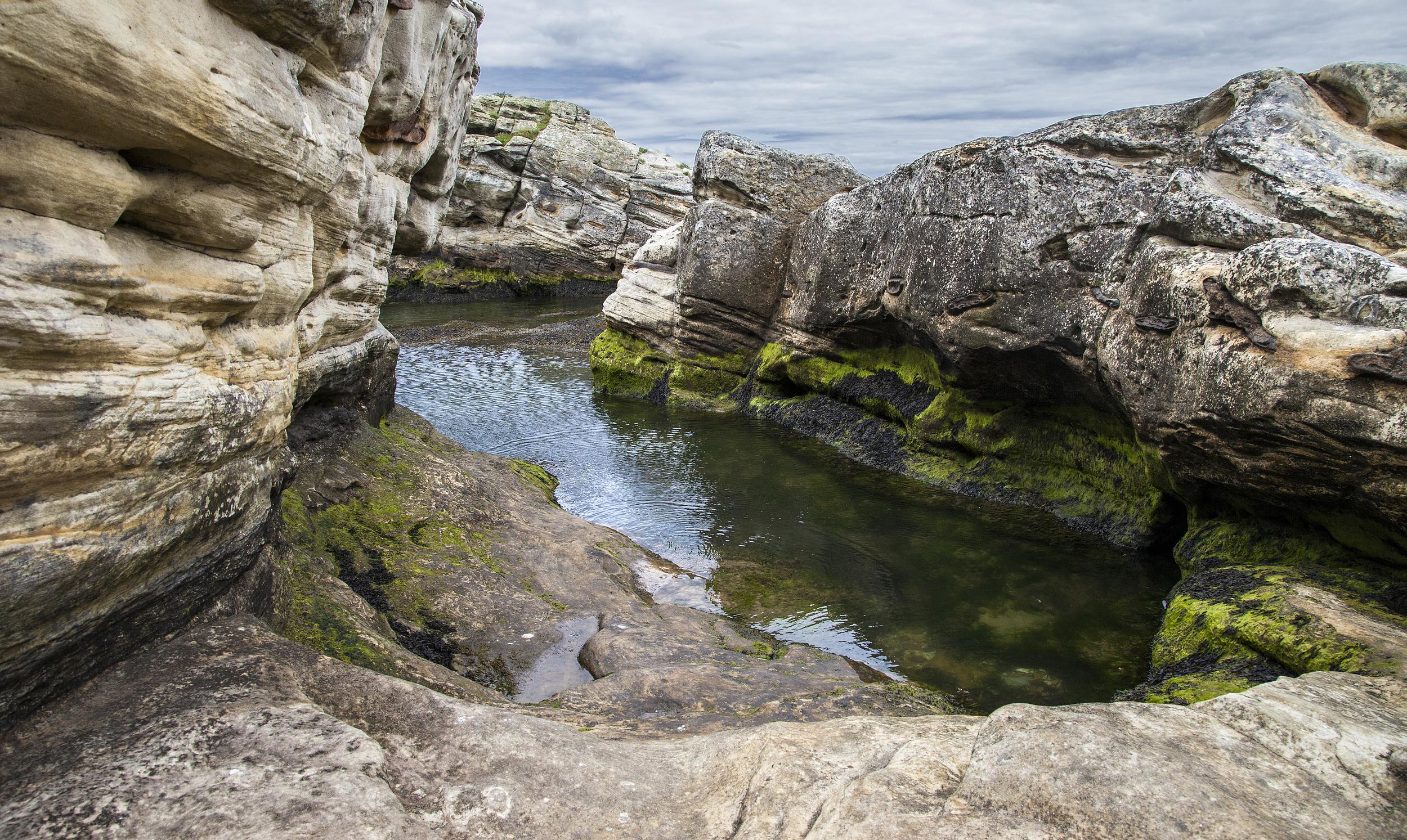 Rock Inlet Algae.jpg