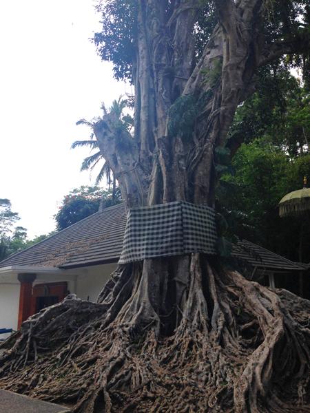 Tree spirit_0982.jpg