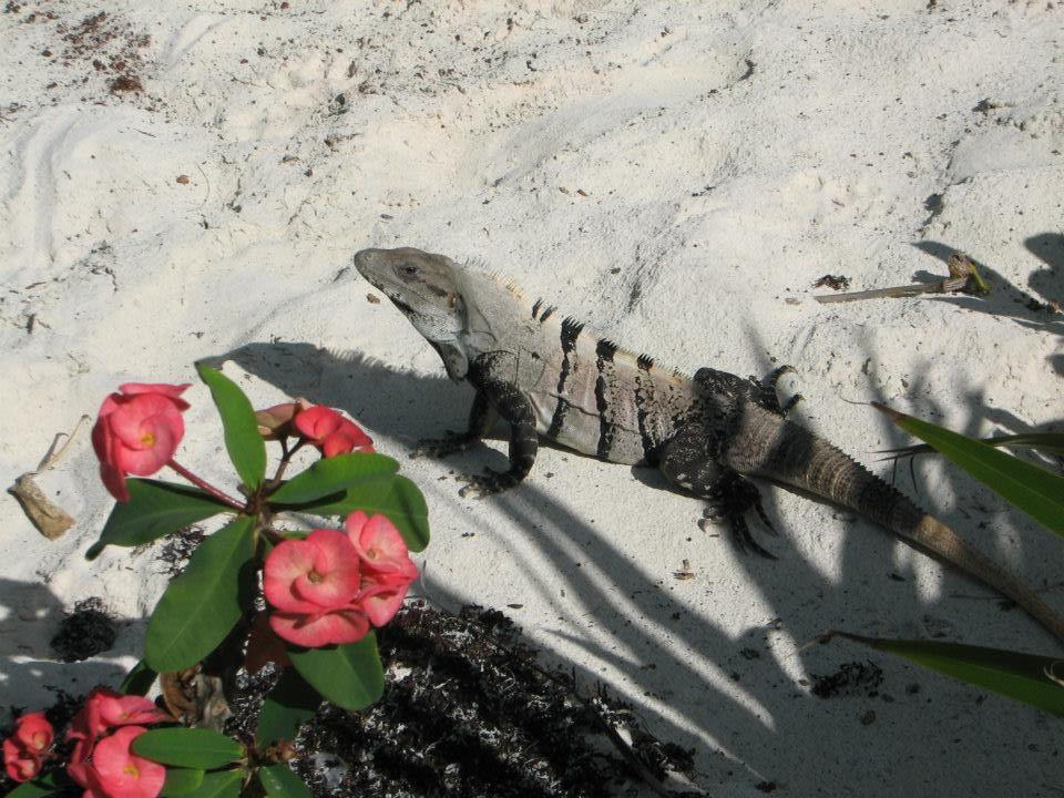 iguana with flowers.jpg