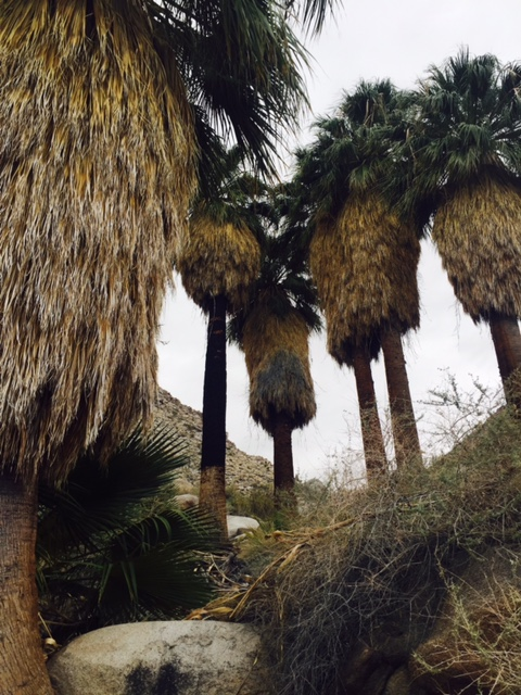 The oasis we hiked to in the freezing cold wind.