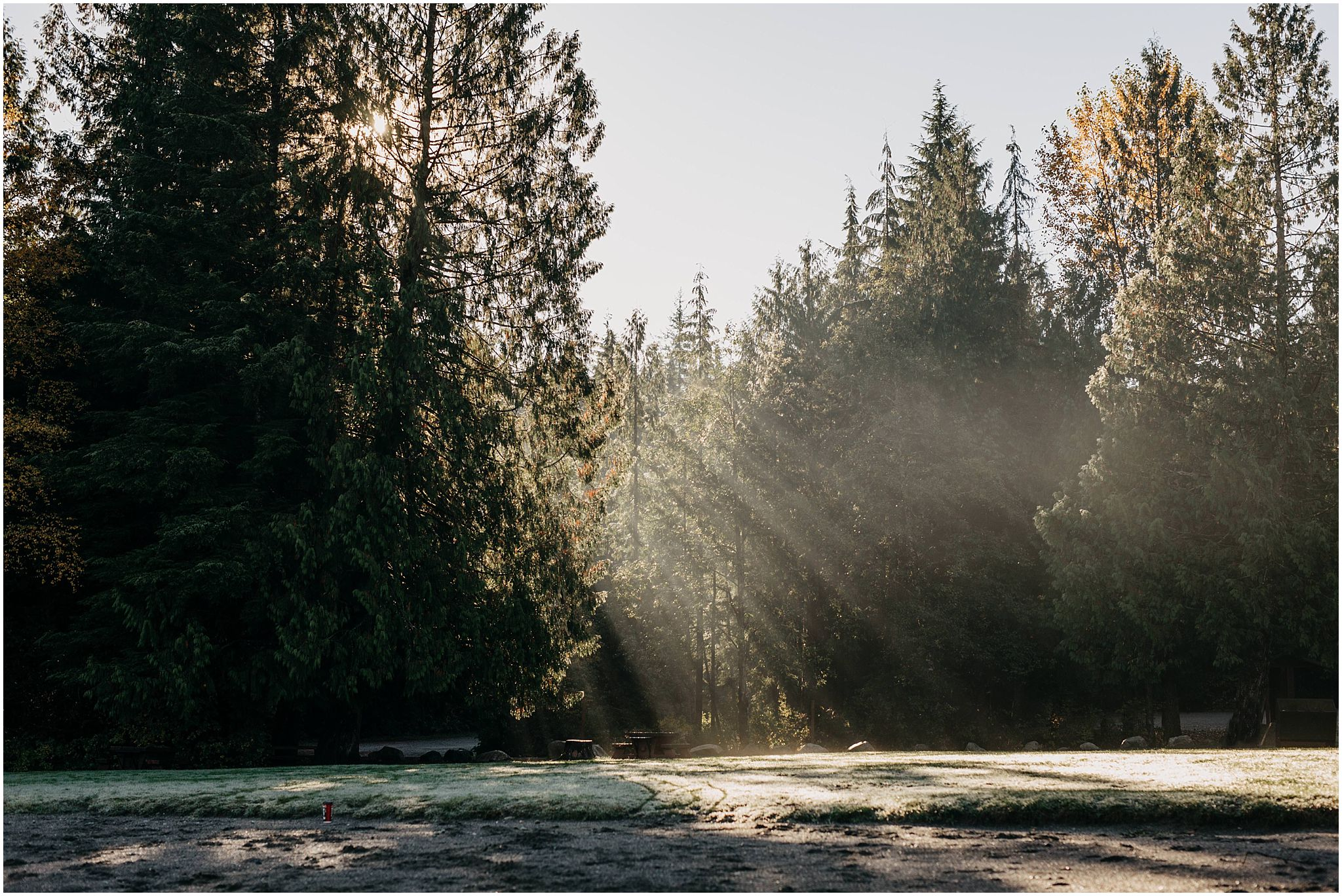 trees sun beams shining through cold fog fall engagement session