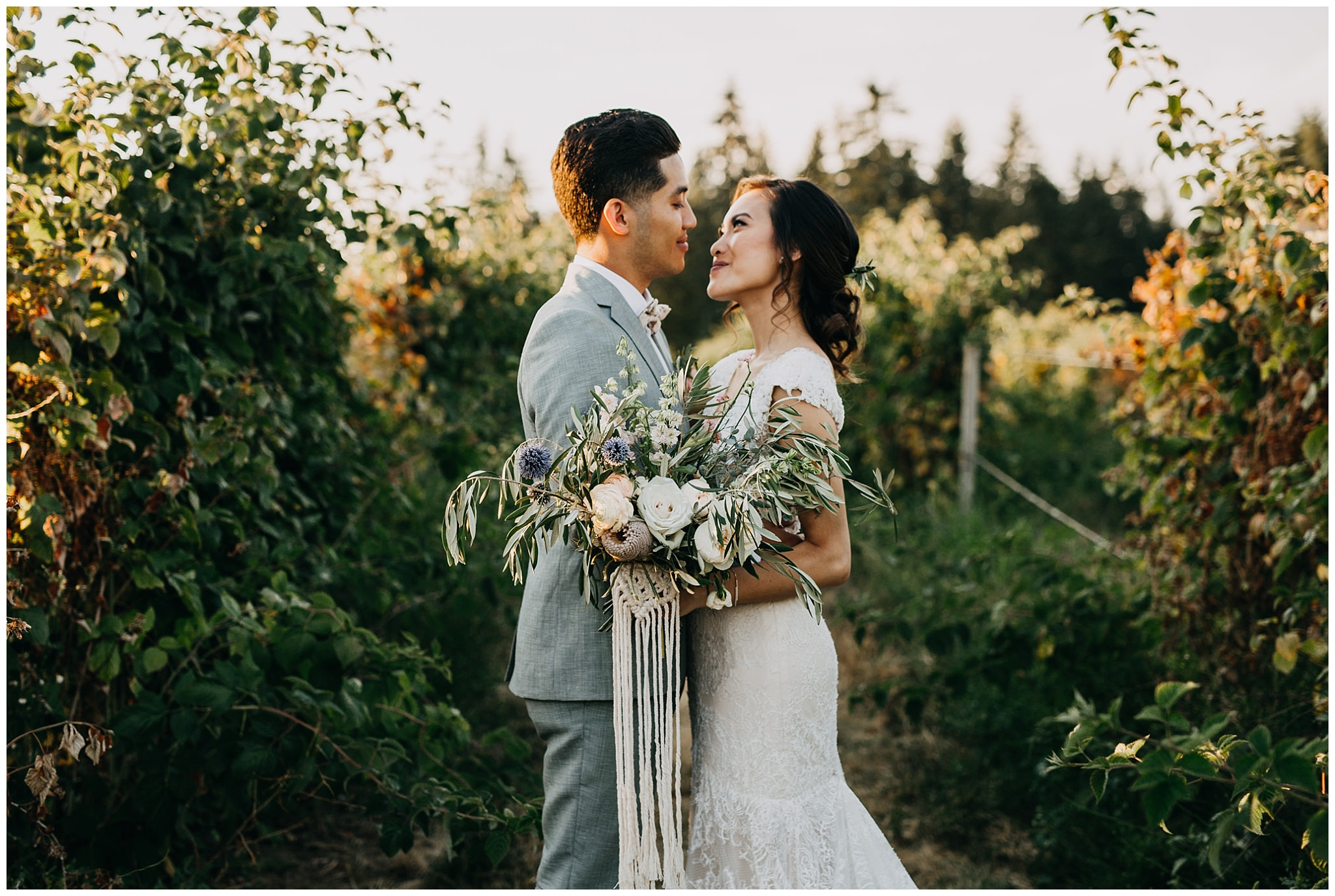 bride and groom sunset portrait in vineyard at krause berry farm wedding