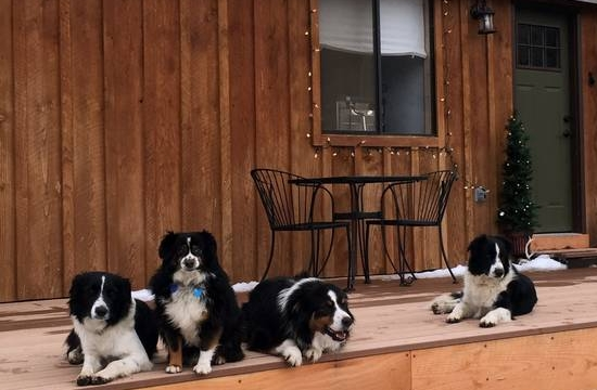 meet our ranch dogs: - Tex, Sparky, Ruger and Mickey are great dogs, BUT all four are over the new 20lb size limit!