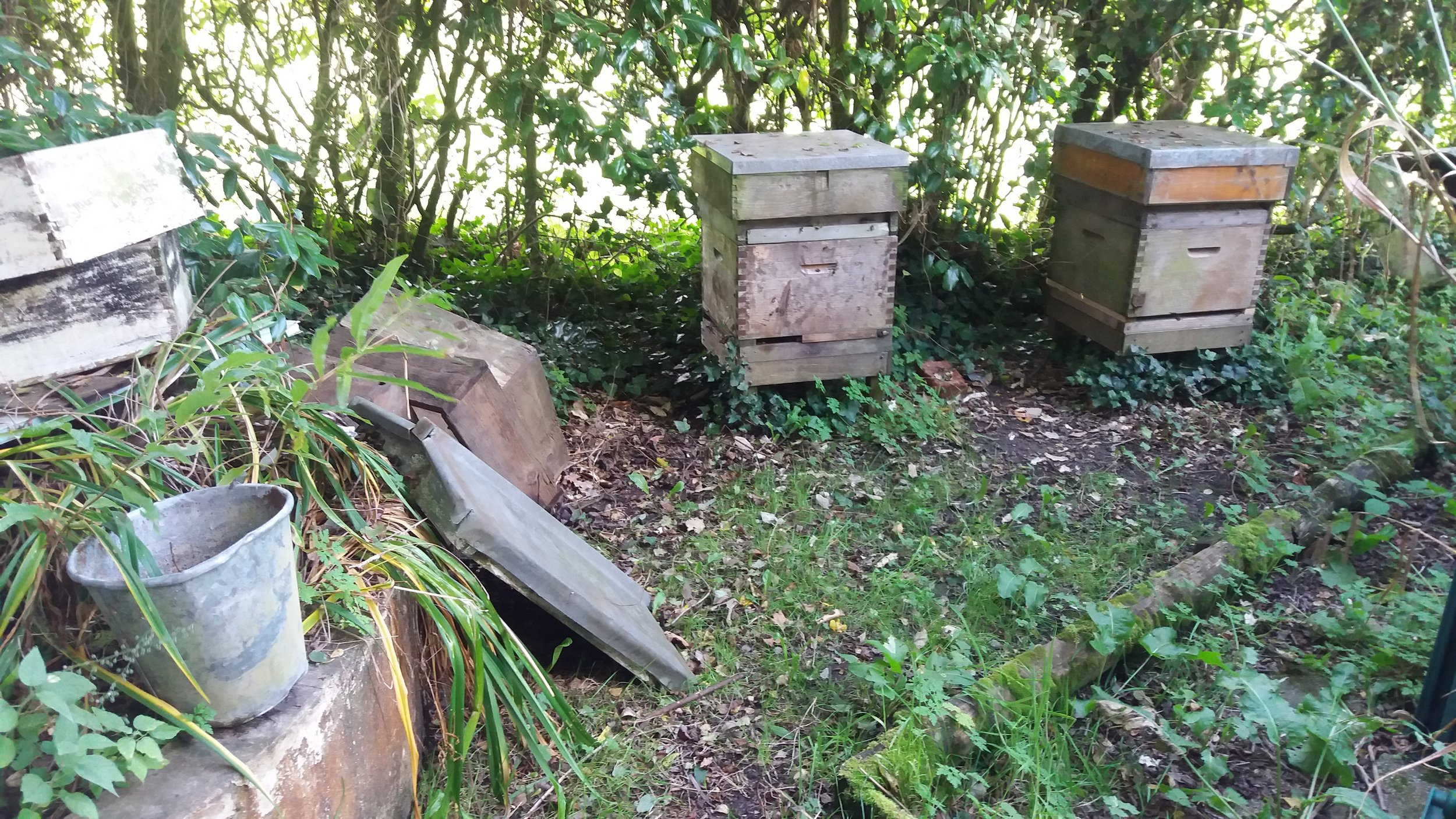 Bee hives in thegrounds