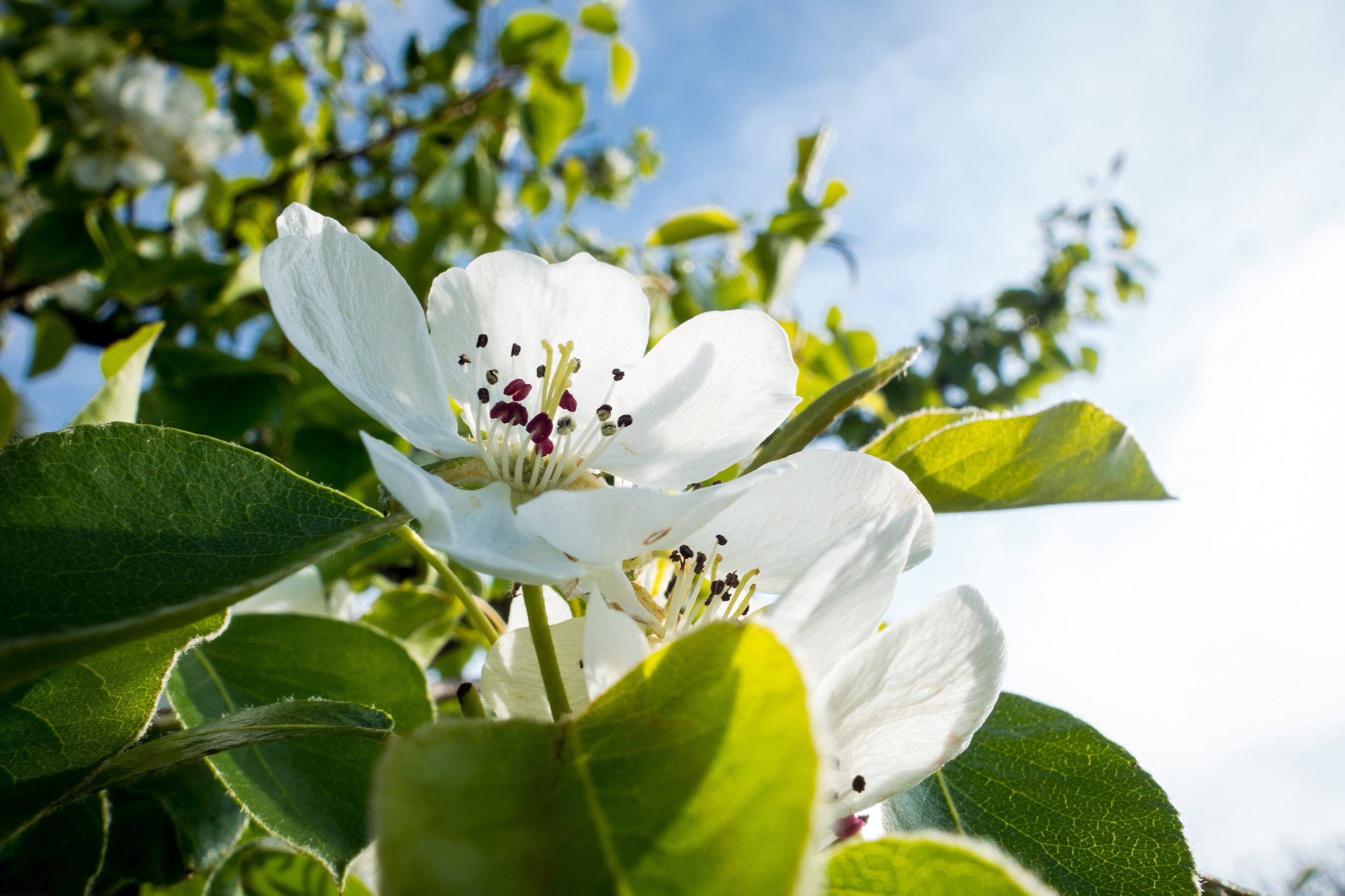 Springtime snapshot with my Sony RX100 Mk.2