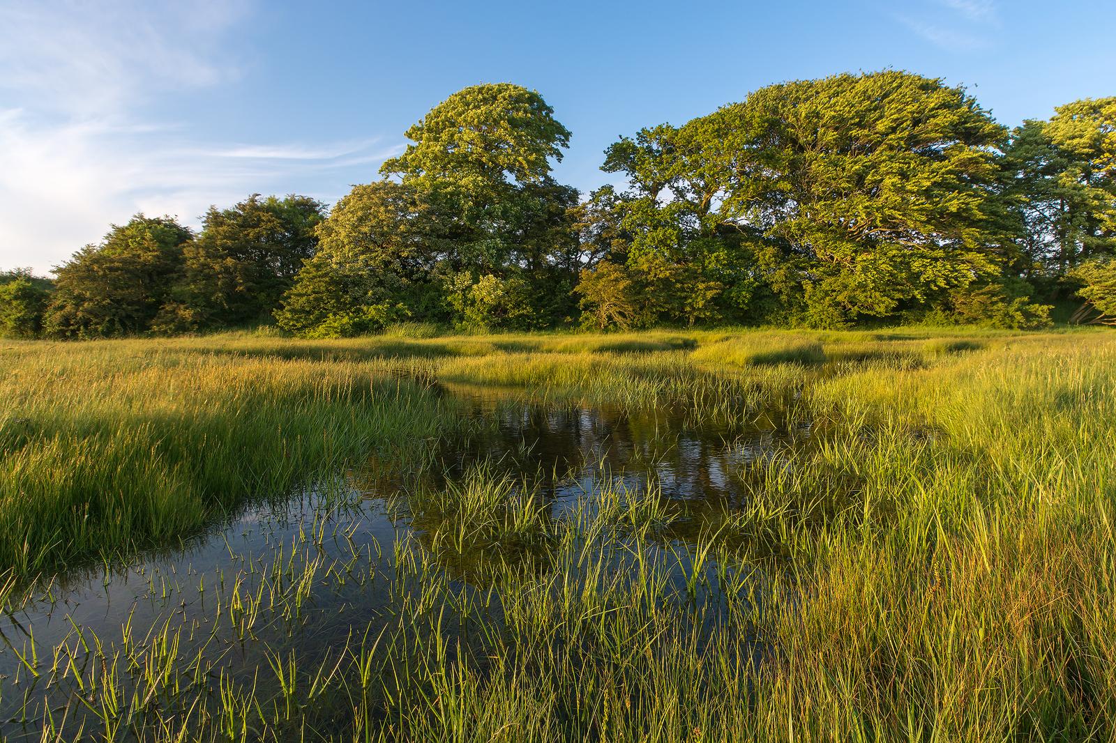Wetlands  2014