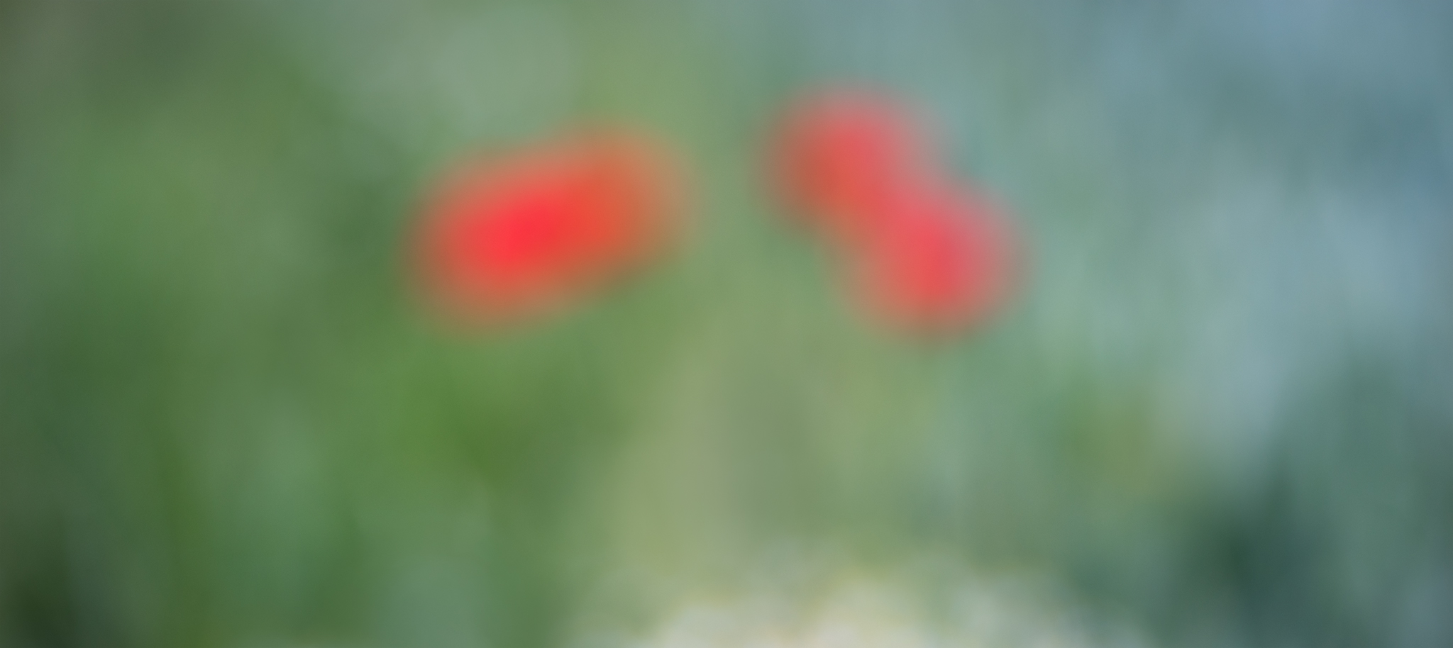 Poppy Impressions  Diffused image of poppys in grass field   2017