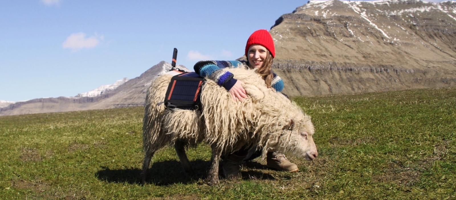 14Google Sheep View.jpg