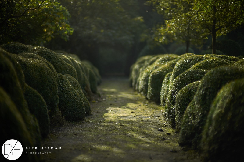 Garden Jacques Wirtz 4* - Late Summer_by_Dirk Heyman (dh_photo@bluewin.ch)_1592.jpg
