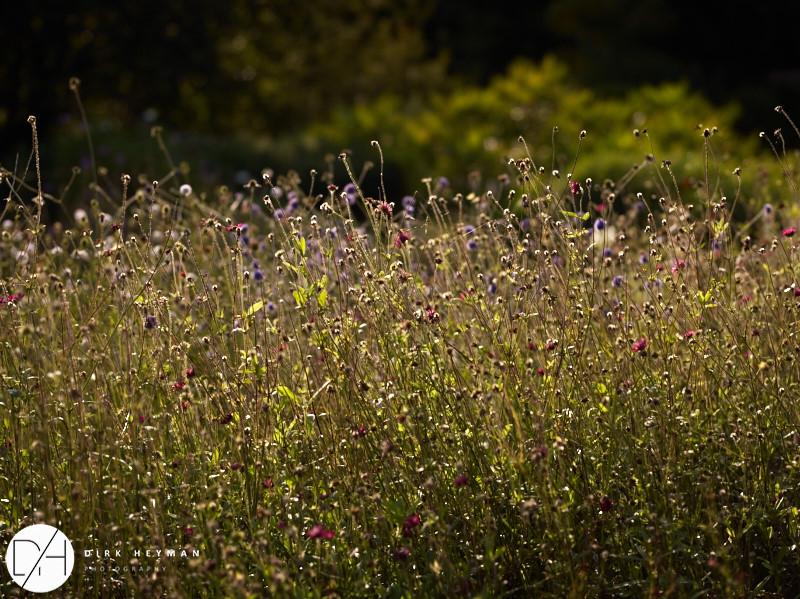 Garden Jacques Wirtz 4* - Late Summer_by_Dirk Heyman_1580.jpg