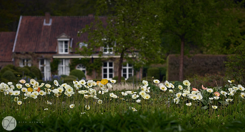 Wirtz Gardens 5 Star May by Dirk Heyman 8853.jpg