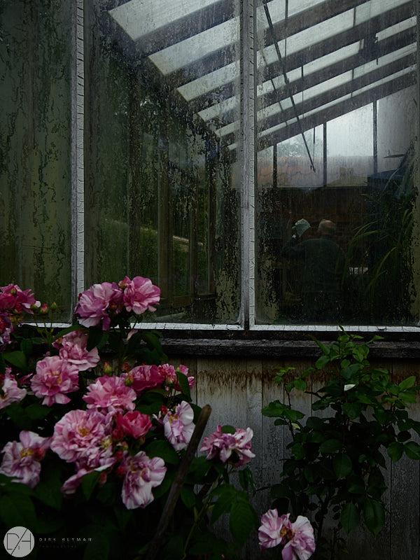 Garden Jacques Wirtz Spring 5 Star Colour by Dirk Heyman 7248.jpg