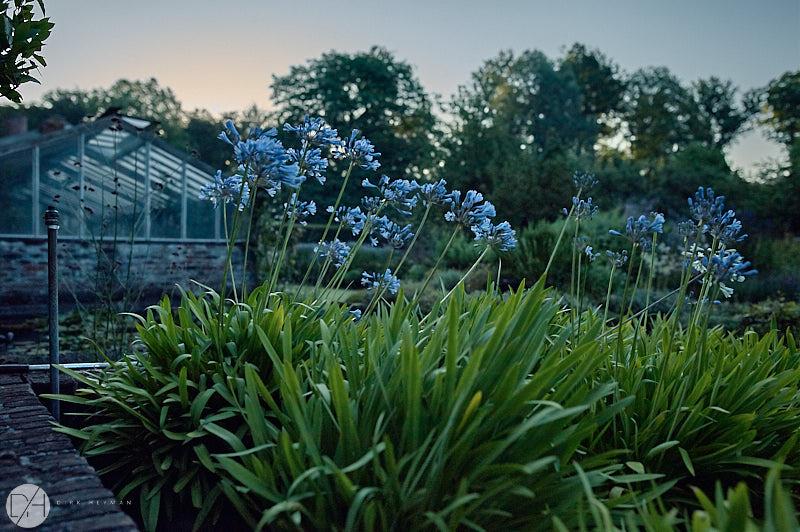 Garden Jacques Wirtz Summer by D Heyman.jpg