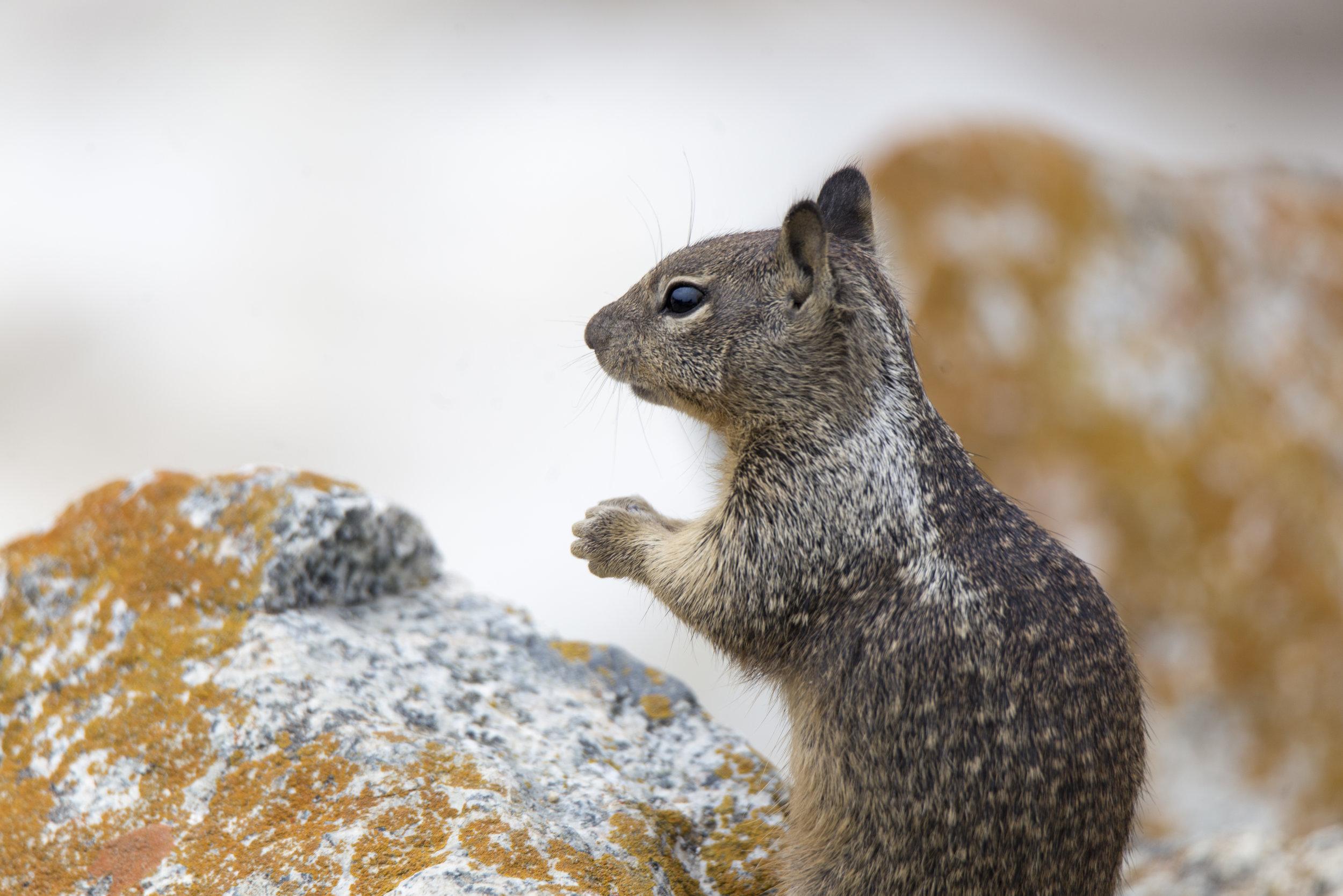 17miledrive_squirrel1.jpg