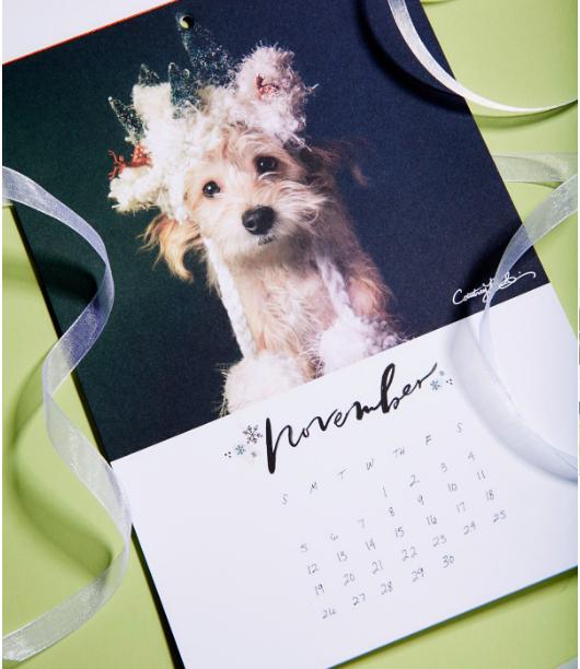 FP x PAWS 2017 Calendar