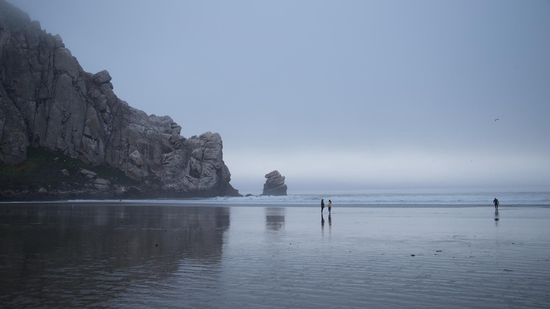 Entangled in the Life Cycle, San Luis Obispo, 2014