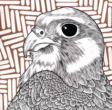 the-100-falcon.jpg