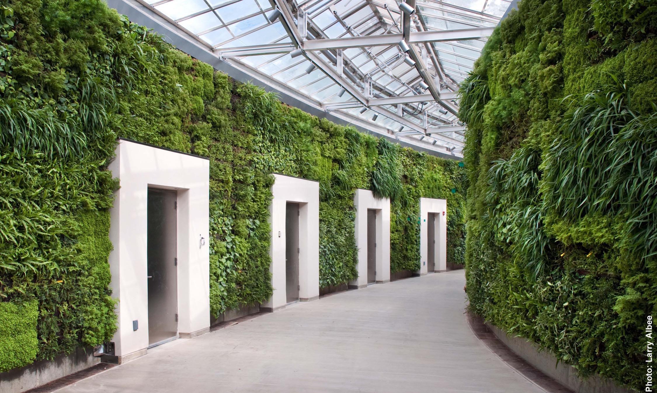 green wall 1 albee--med_no logo.jpg