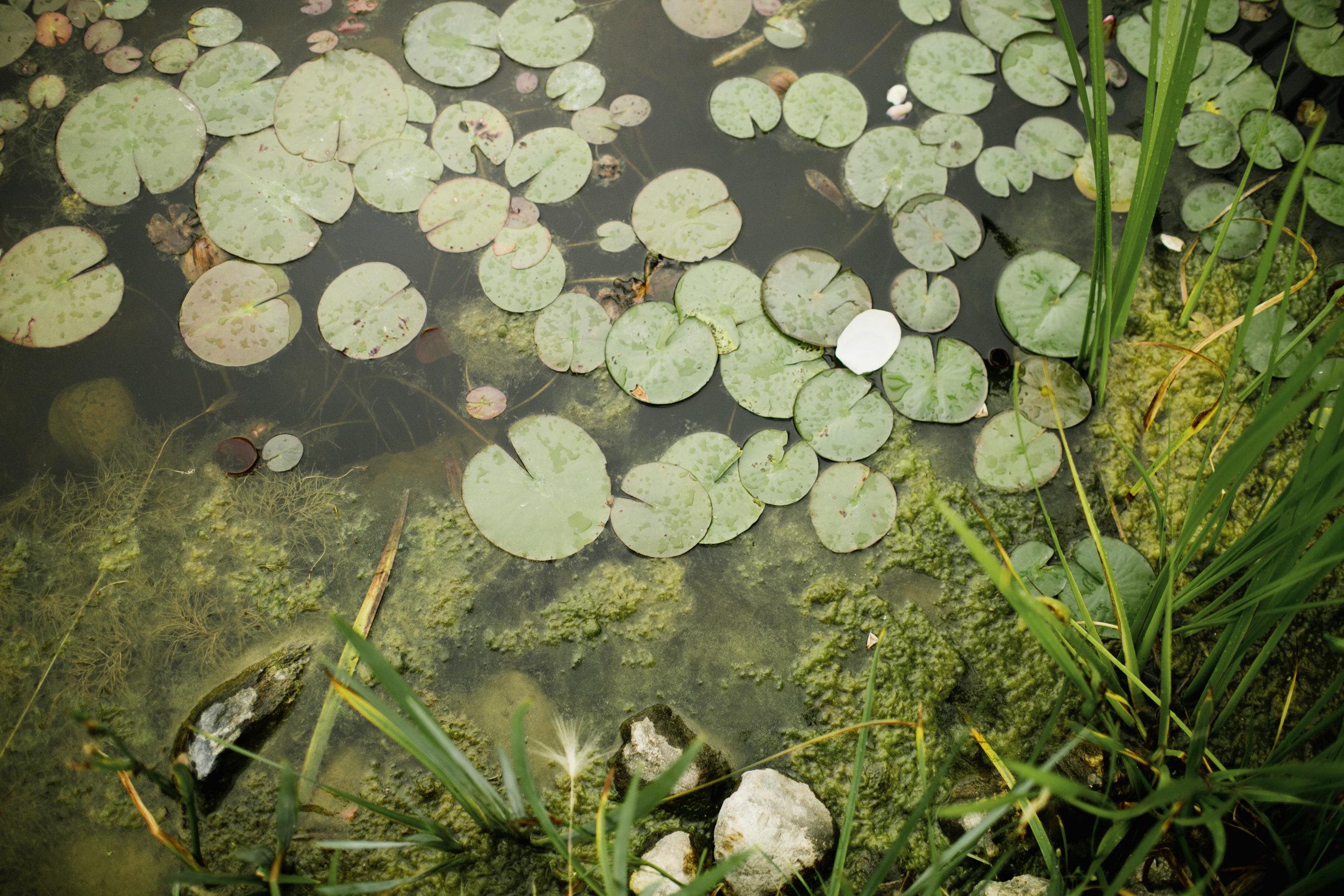 Reiman Gardens Pond