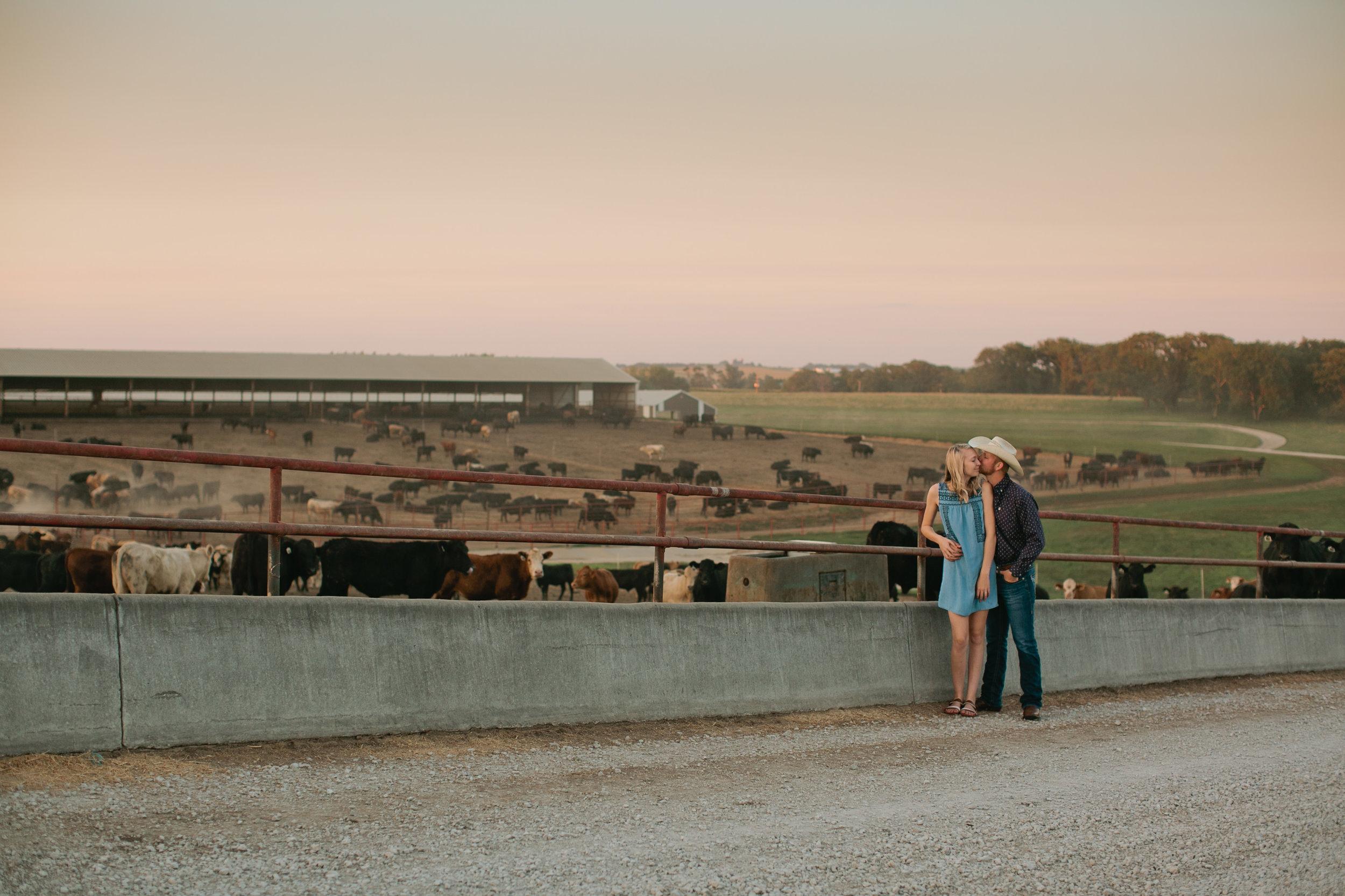 iowa_cattle_farming_industry