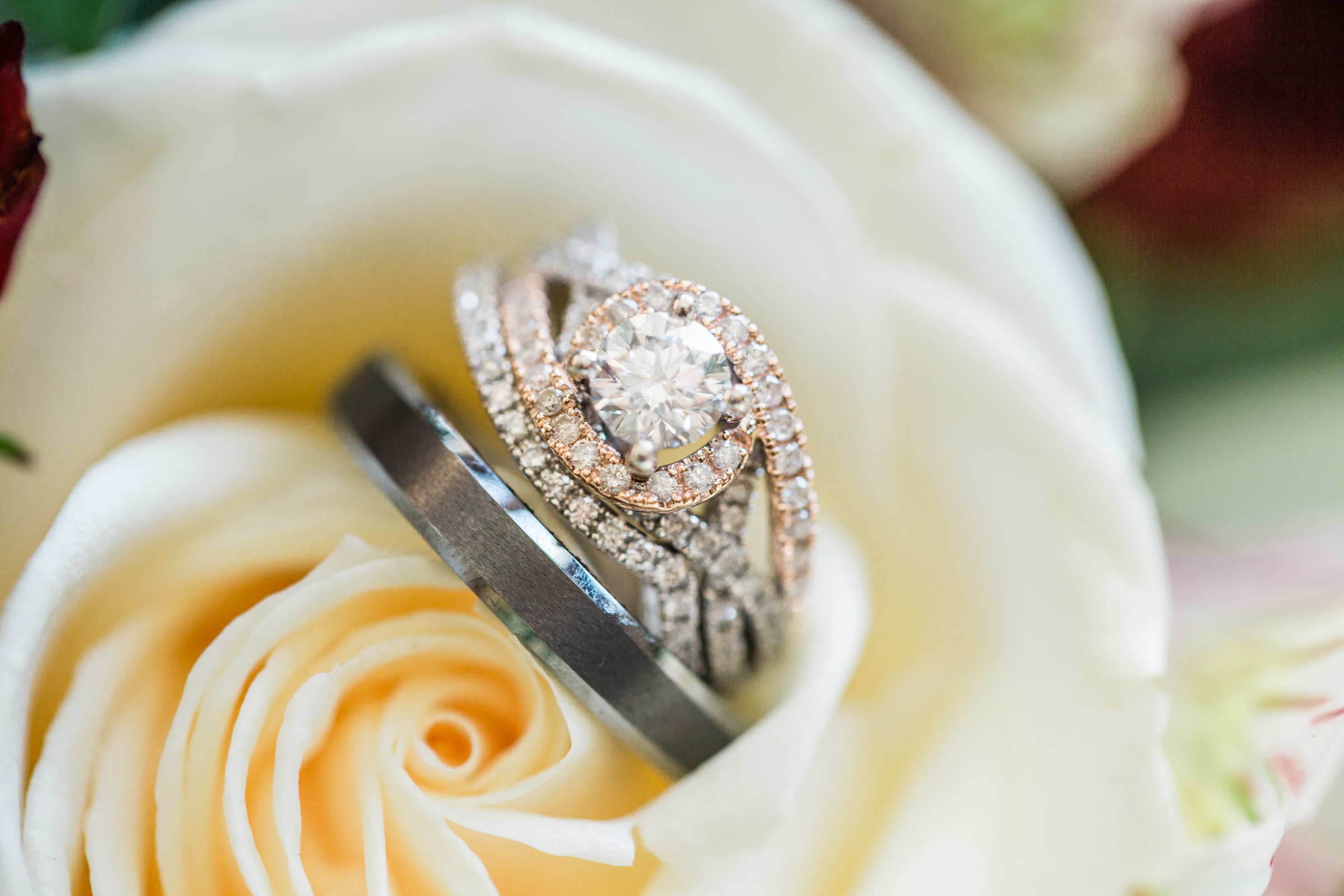 wedding ring photos on white rose
